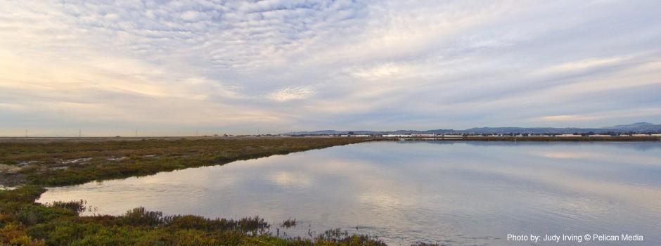 Salt Pond Selected Images, 2007