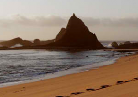 Tell Governor Brown: Open Martin's Beach!