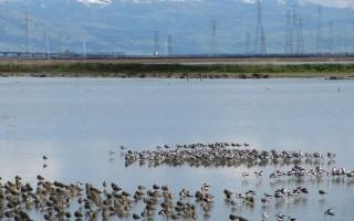 Cargill RWC birds on Pond 10 Feb 20, 2011 photo by Matt Leddy
