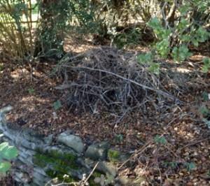 F- Woodrat nest-Nancy_Reyering