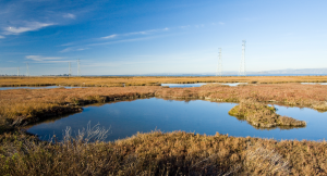 Earth Day Bird Walk @ Palo Alto Baylands Athletic Center | Palo Alto | California | United States
