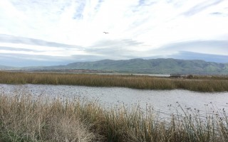 Don Edwards Wildlife Refuge - photo by Garima Wilson