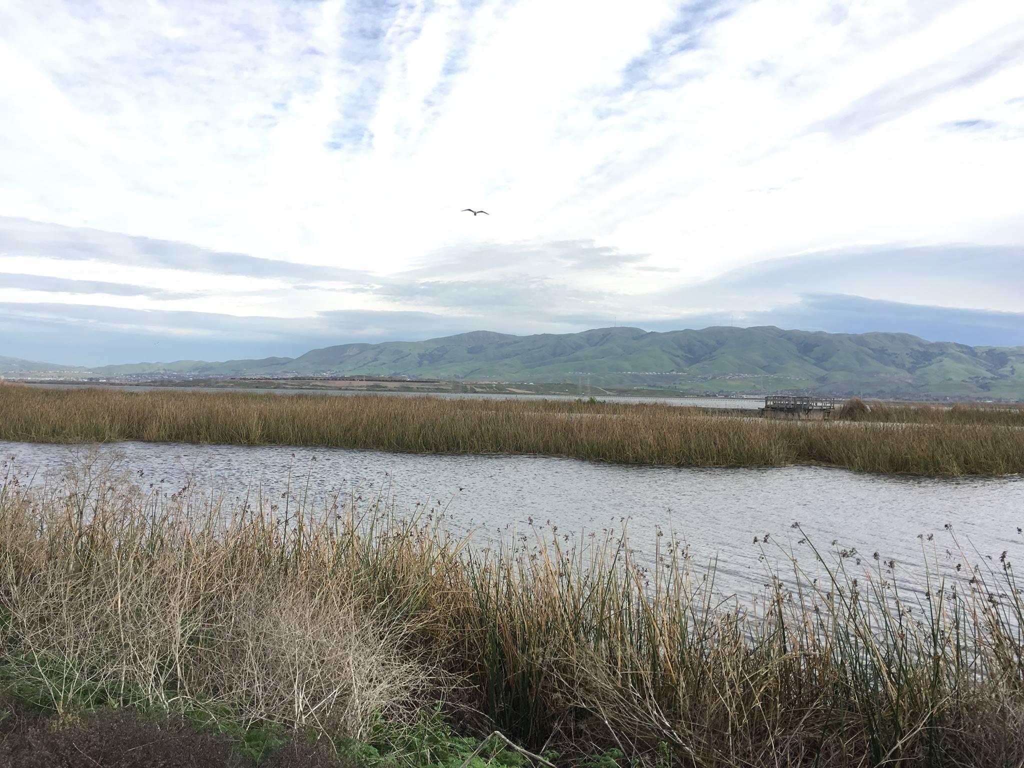 CGF Endorses Bay Restoration Funding