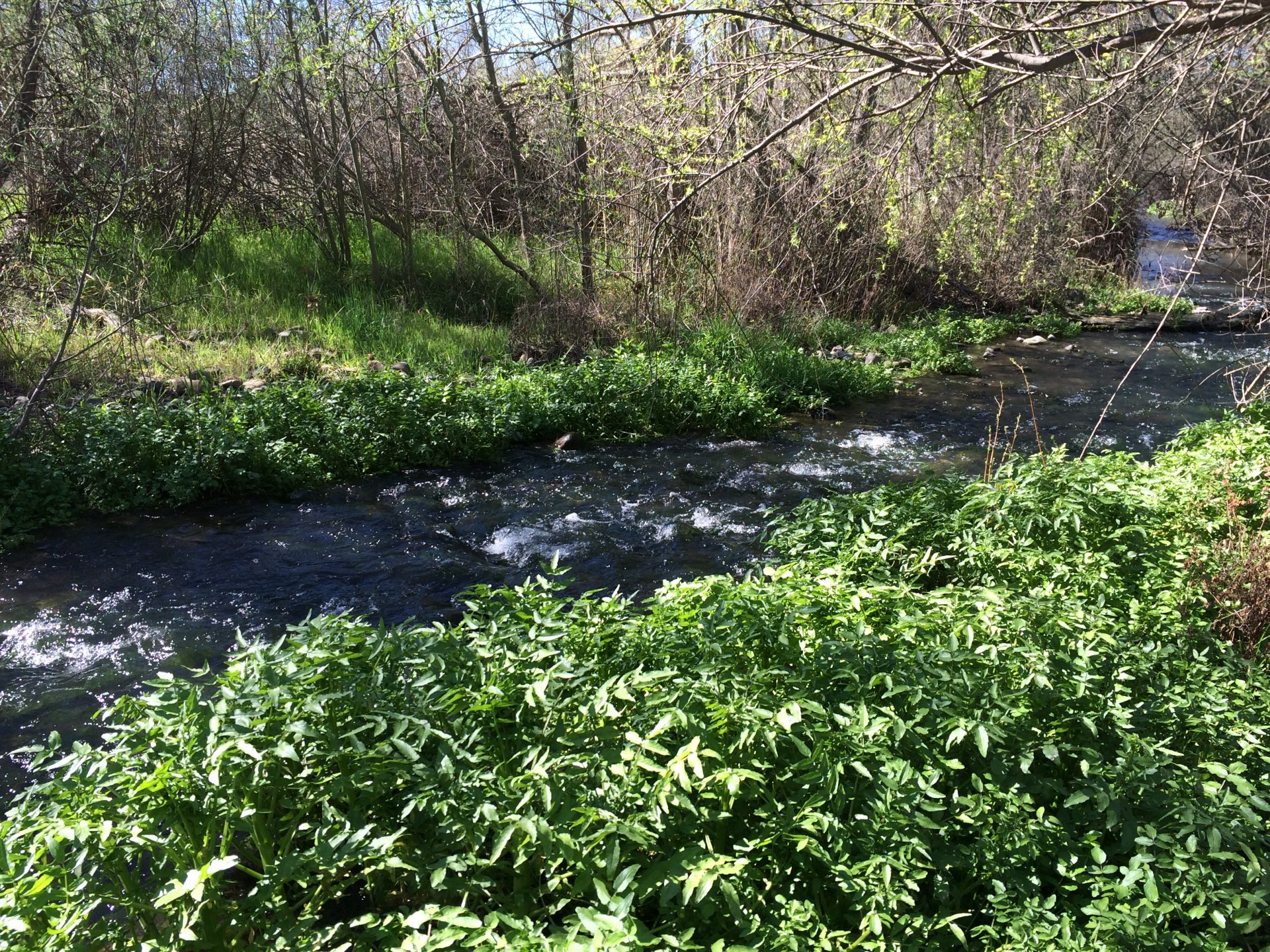 Speak up for riparian corridor protection and bird-safe design