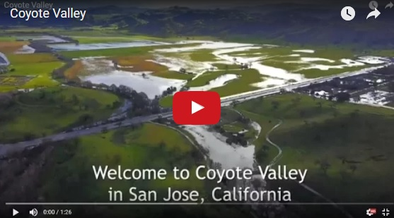Join Us in Speaking Up for Coyote Valley