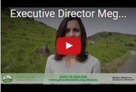 Executive Director Megan Medeiros on Our Annual Report