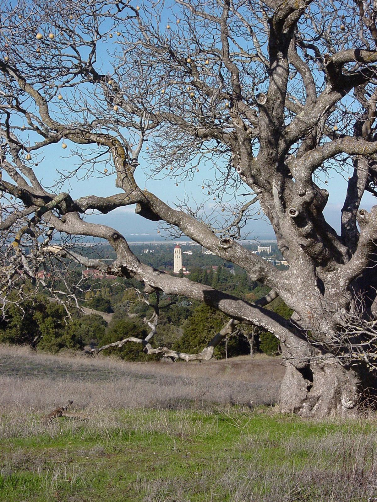 Speak up for Stanford Foothills