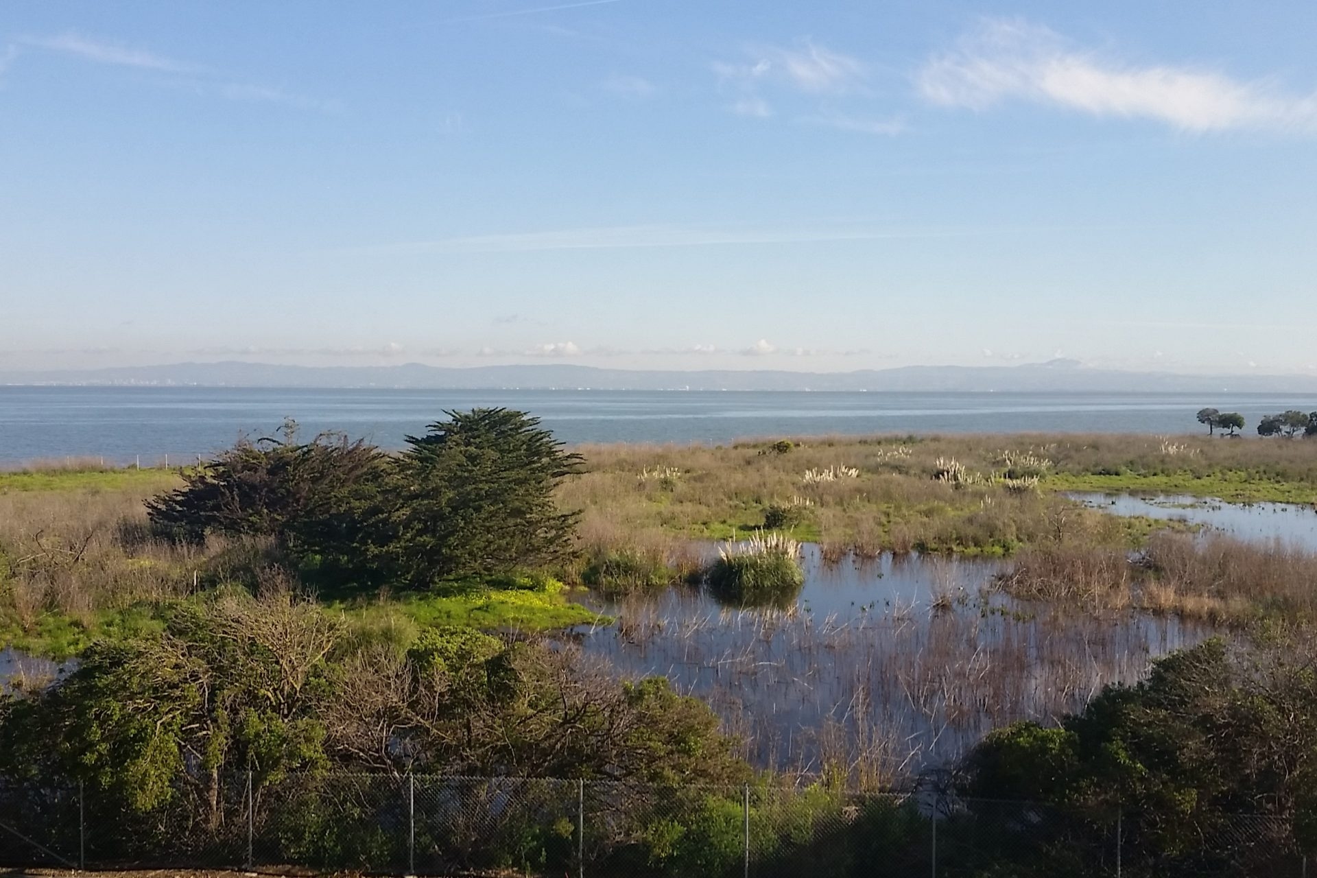 Speak up for Habitat Restoration & Access to the Bay in Burlingame