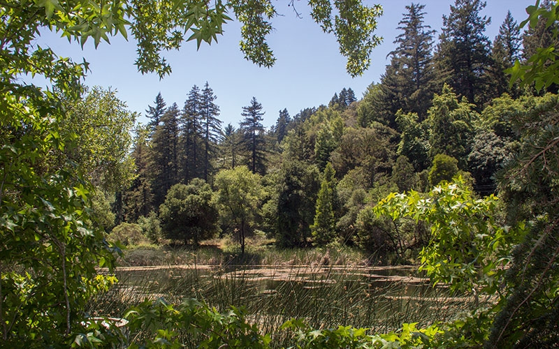 Bear Creek Redwoods: A Special Property with A Complicated Past