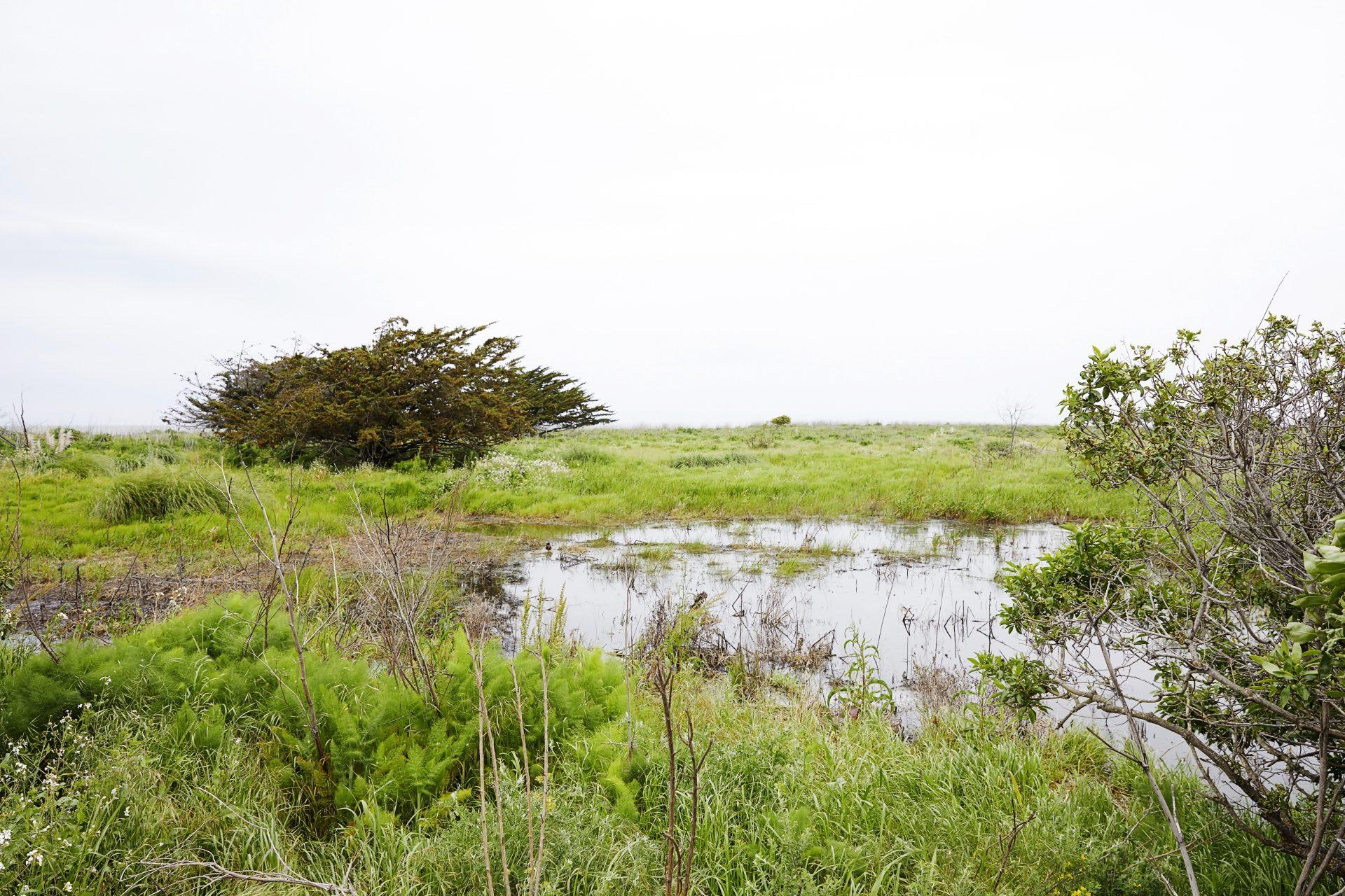 Burlingame Shoreline Park Petition