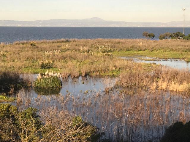 Interns Boost Burlingame Shoreline Park Petition