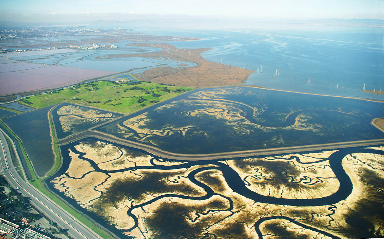 Action Alert: Stop Cargill – Protect Our Bay Shoreline