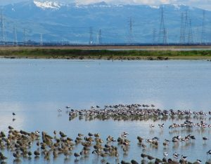 Are the Cargill saltwater ponds part of San Francisco Bay? Take a look for yourself!