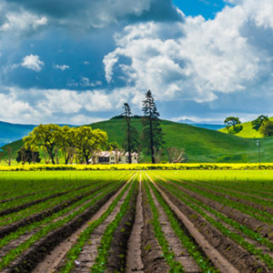 Supervisors Uphold $5 Million Promise for Farmland Preservation