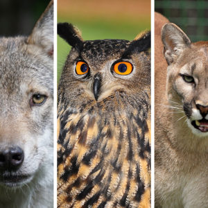 EPA Should Ban Predator-Killing Rodenticides