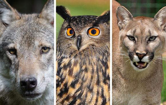 EPA Should Ban Predator-Killing Rodenticides