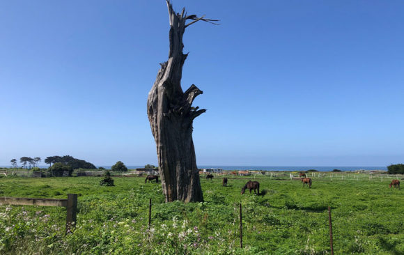 Half Moon Bay's Local Coastal Land Use Plan Update – and Encouraging News for Dunes Beach