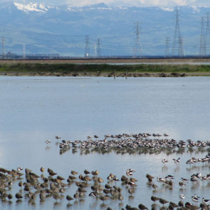 Latest Actions to Protect Redwood City's Shoreline