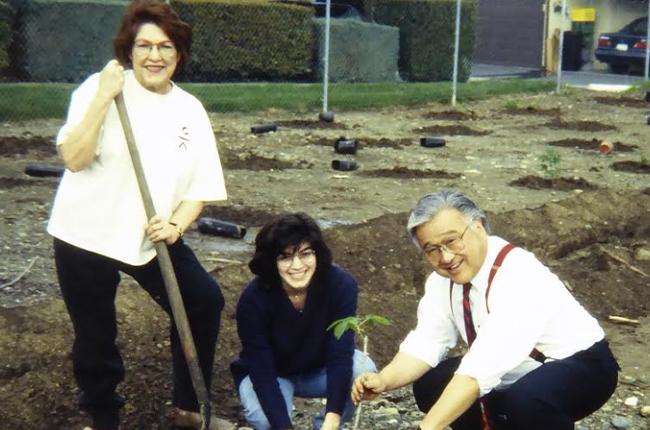 3 people planting tree