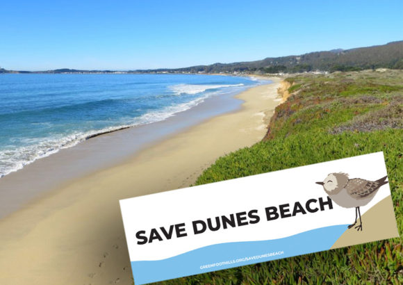 Support Protection of Dunes Beach at Coastal Commission Hearing