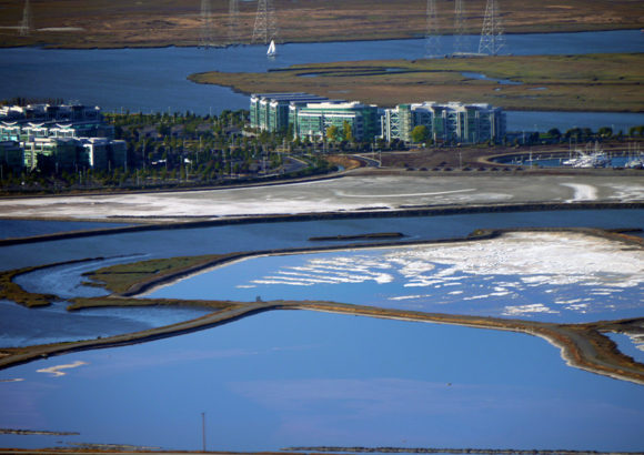 Cargill Abandons Appeal of Court Ruling Protecting Redwood City Salt Ponds