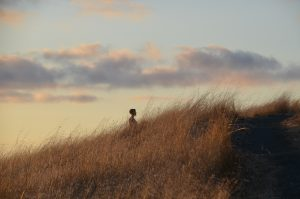 Lone figure standing on hill at sunset at Long Ridge